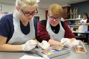 Health careers student and a pig's heart